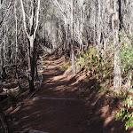 Track towards White Horse Bay from Kianiny Bay (102406)