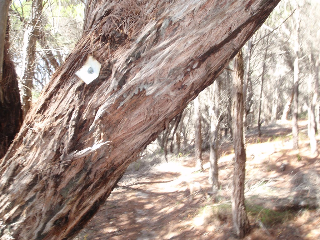 One of many track markers bolted to trees (102409)