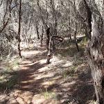 Light to Light walk through the bush (102418)