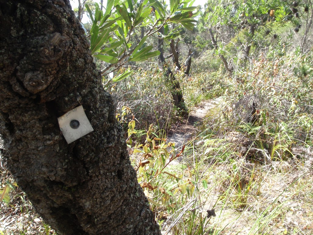 One of many track markers bolted to a tree