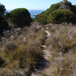 Track through low grass