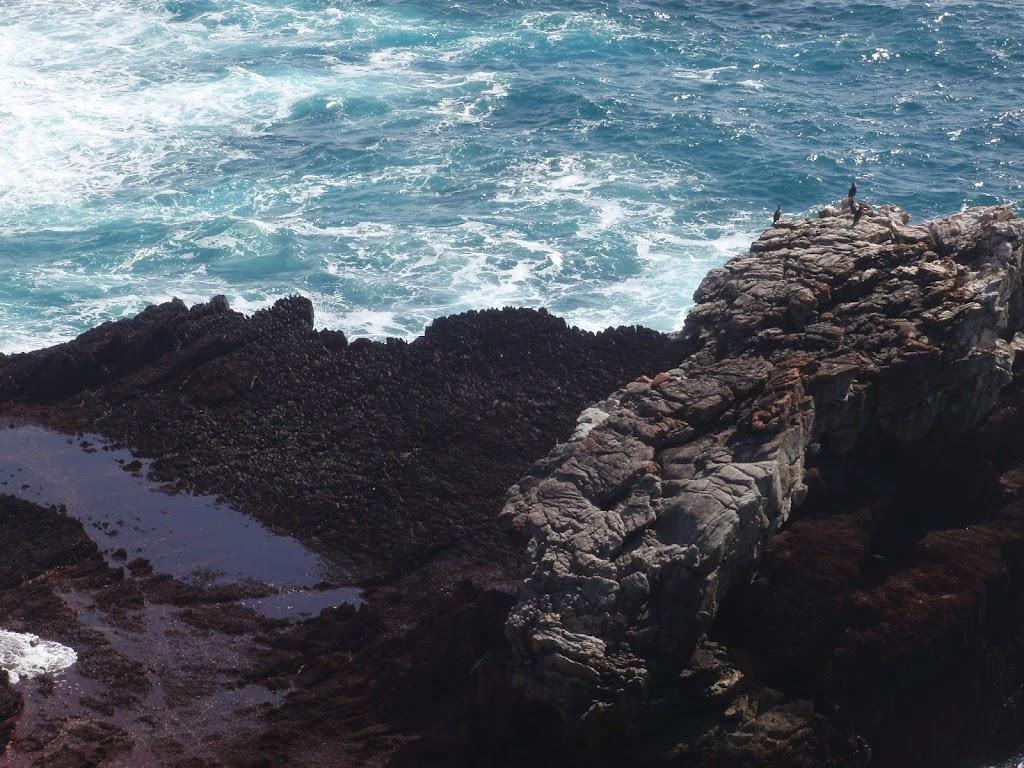 Birds sunning on island
