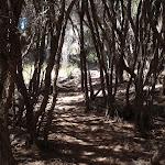 Shady track through the heath (103243)