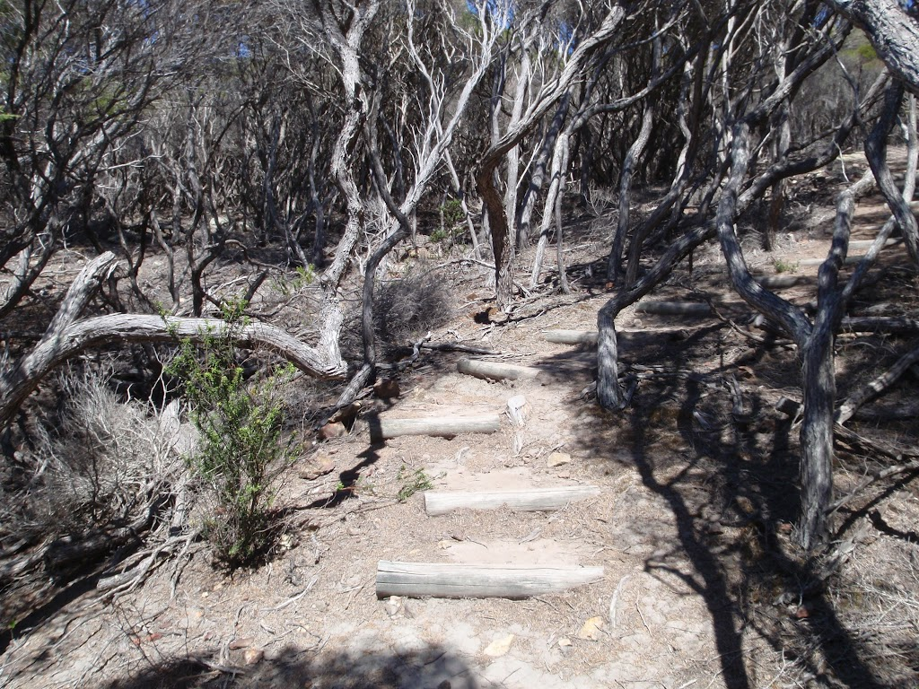 Stairs on Kangarutha Track