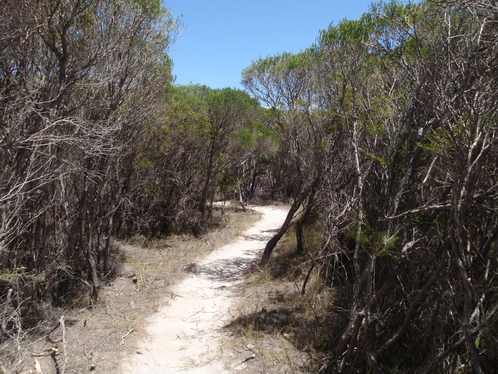 Kangarutha Track north of Wallagoot Gap