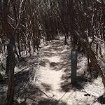 Track through heath to Wallagoot Gap