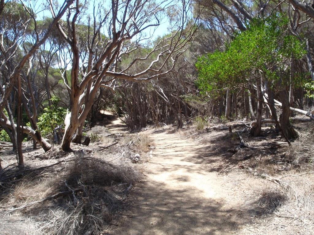 Track away from Wallagoot car park