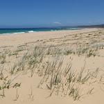 Grass behind Wallagoot Beach (104827)