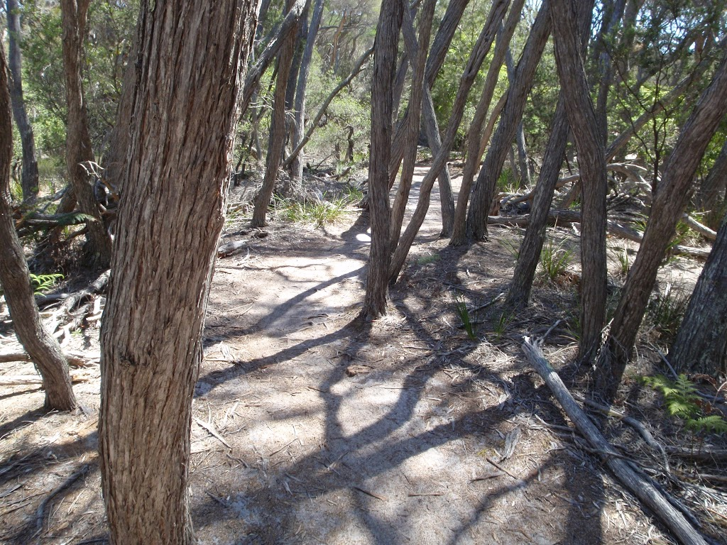 Track through melaleuca trees