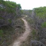 Track winding through the heath