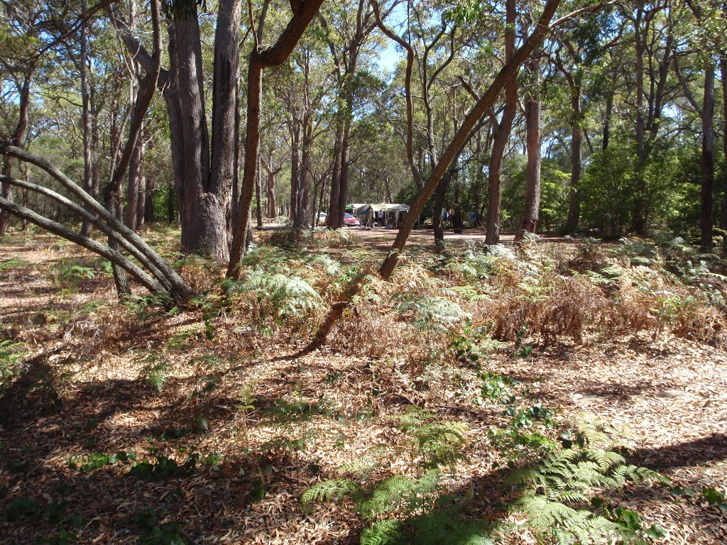 Track away from Hobart Beach camping area (105091)