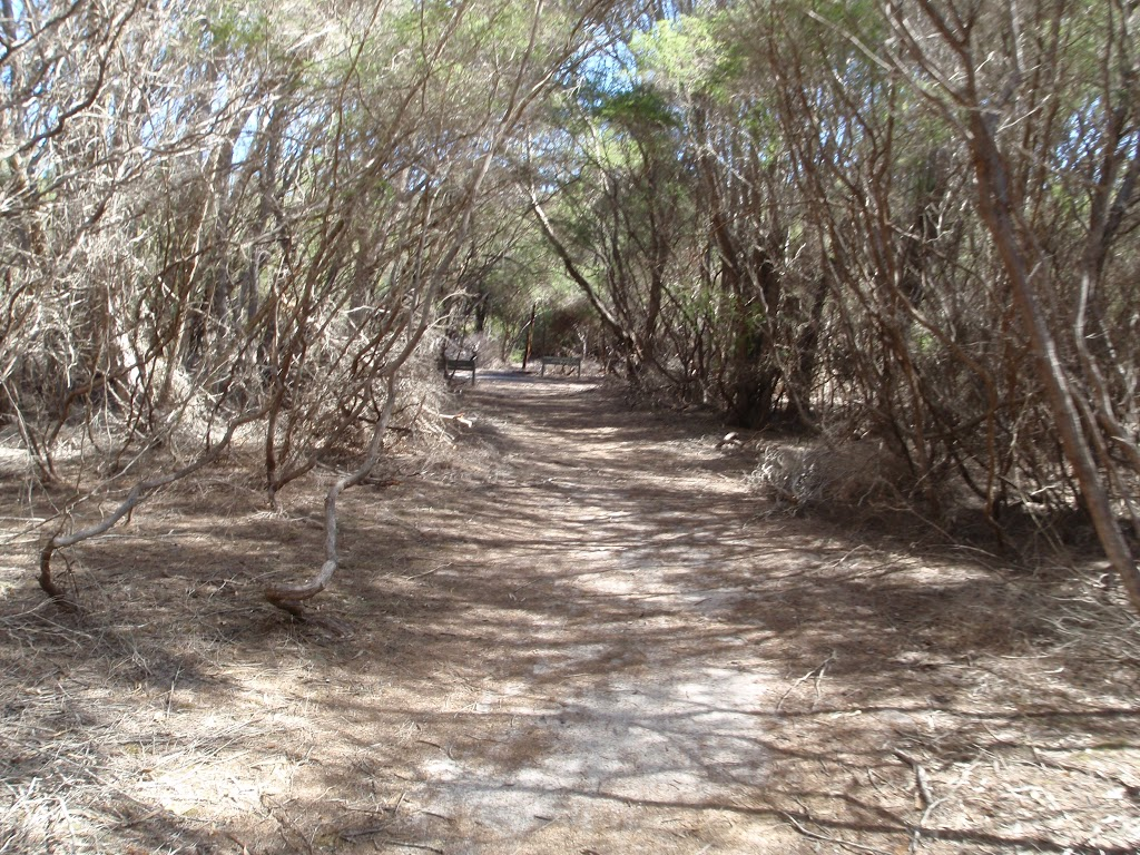 Track through the heath to Scotts Hut picnic area (105310)
