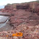 Orange moss on red cliffs