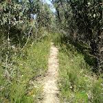The Glen Rosa Track (10571)