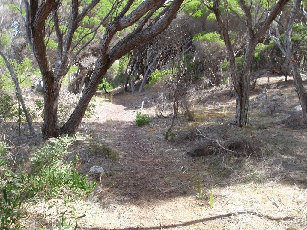 Track through the Melaleuca trees