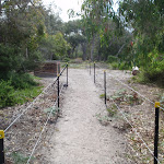 Track to beach Saltwater Creek camping area (105916)