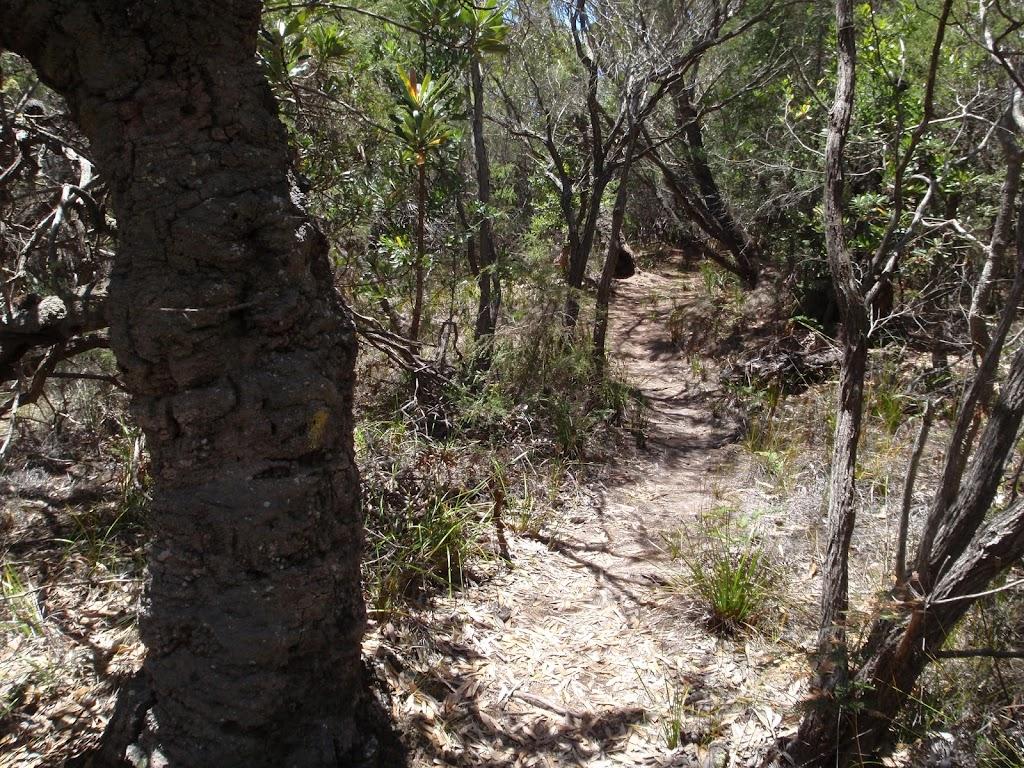 Trck past Banksia near North Tura