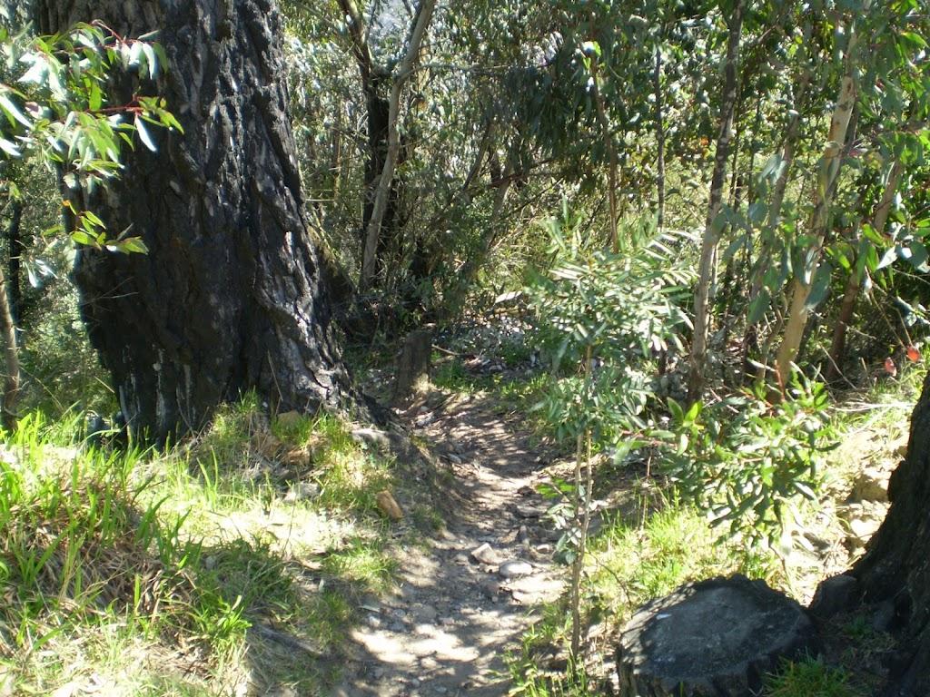 The Wonderland Bushtrack