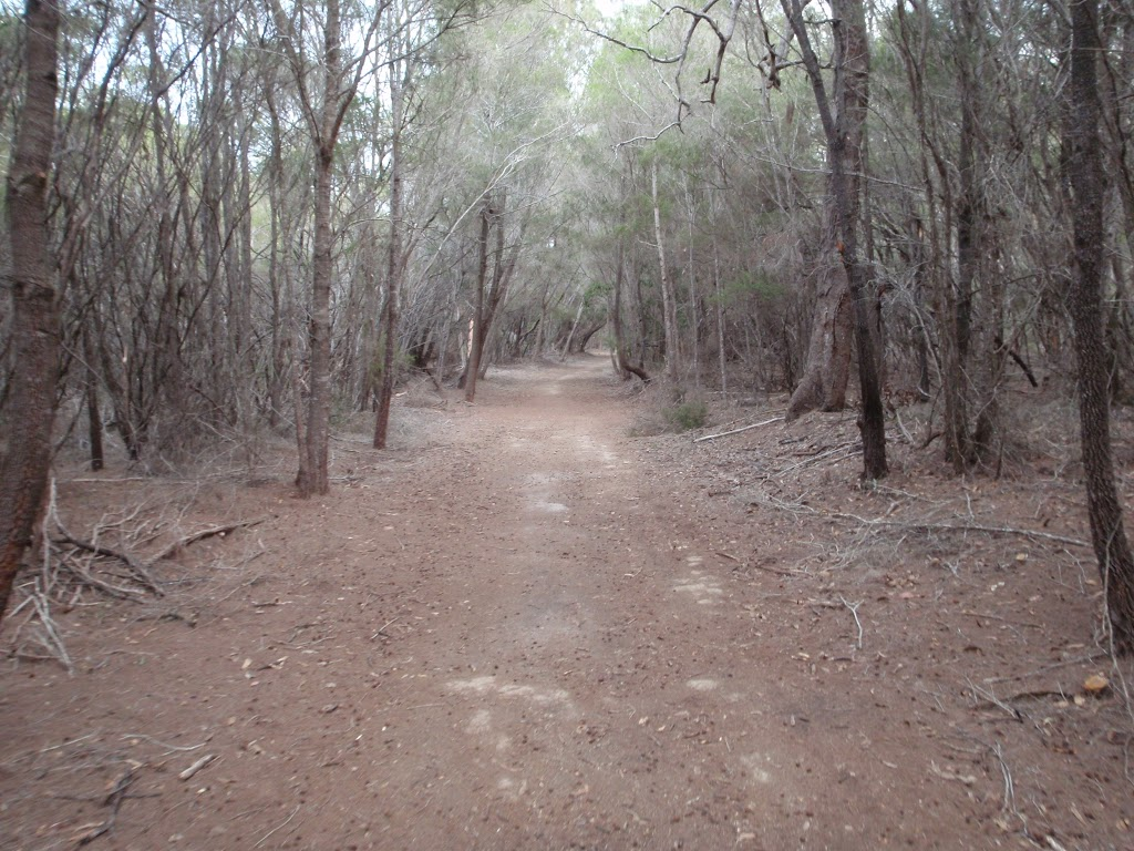 Track south of Hobart Beach camping area