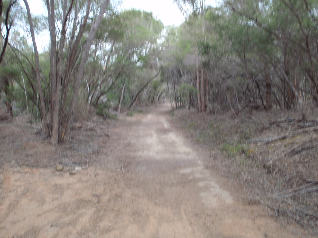 Track to Hobart Beach camping area (106798)