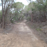 Track to Hobart Beach camping area