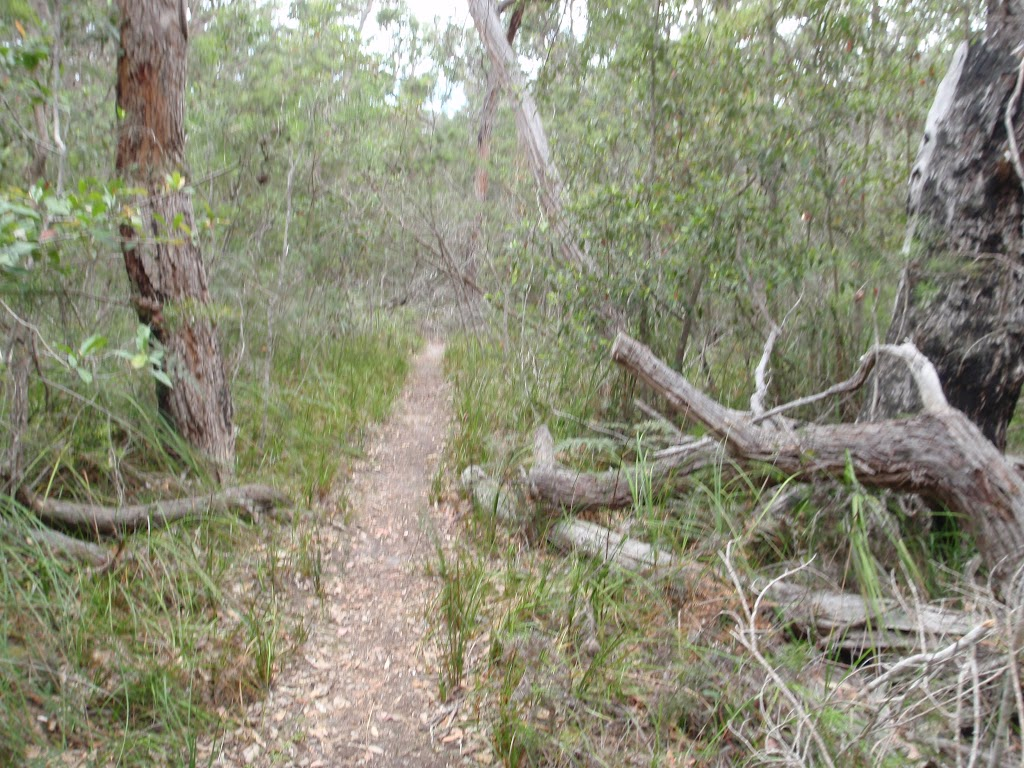 Track along creek south of Bittangabee (106891)
