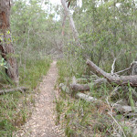 Track along creek, south of Bittangabee