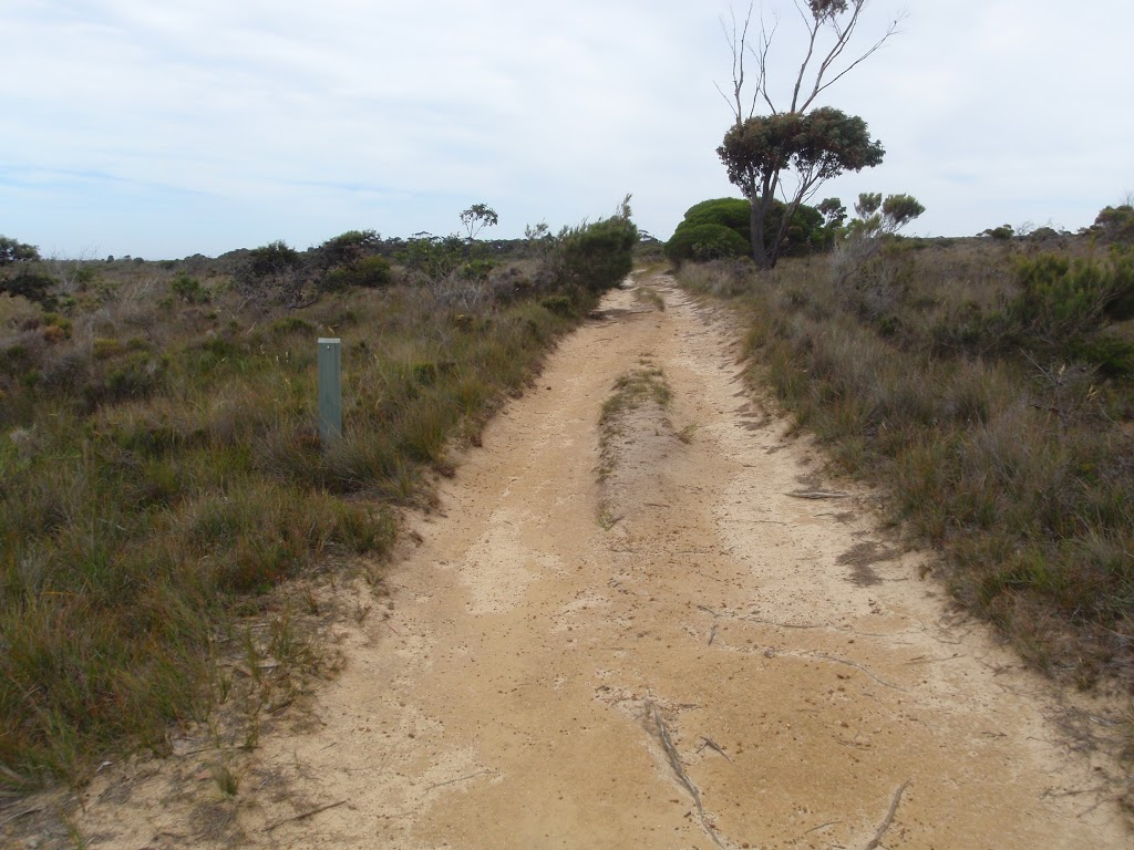 Service trail north of Pulpit Rock Rd