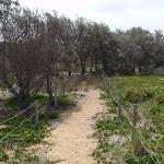 Track ontop of dunes