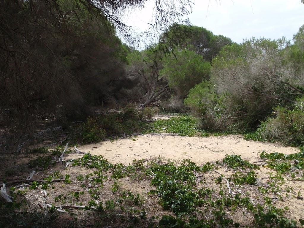 Track behind dunes to Bondi Beach
