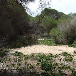 Track behind dunes to Bondi Beach (107176)