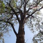 Tree (107248)