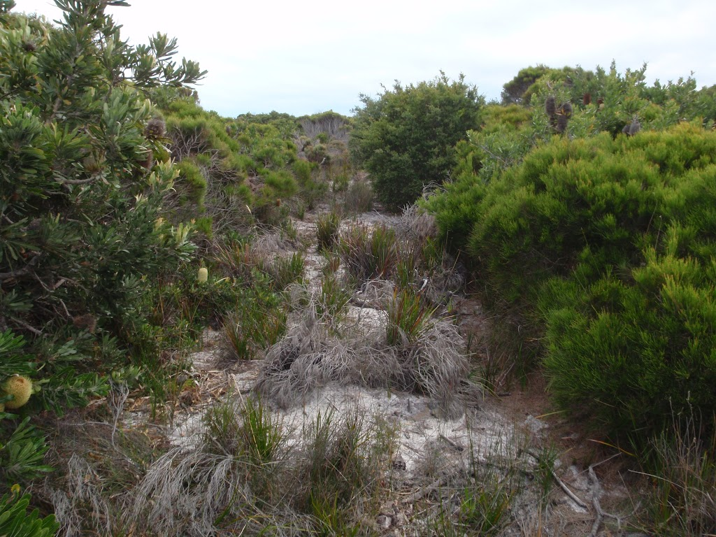 Overgrown service trail