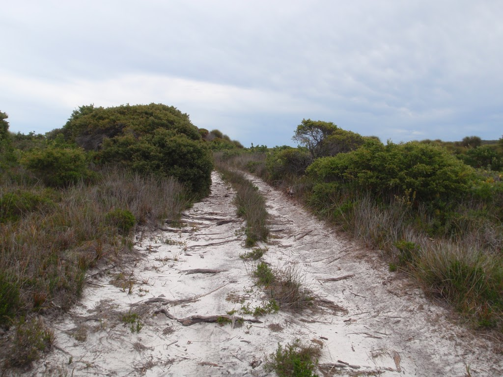 Slightly overgrown service trail