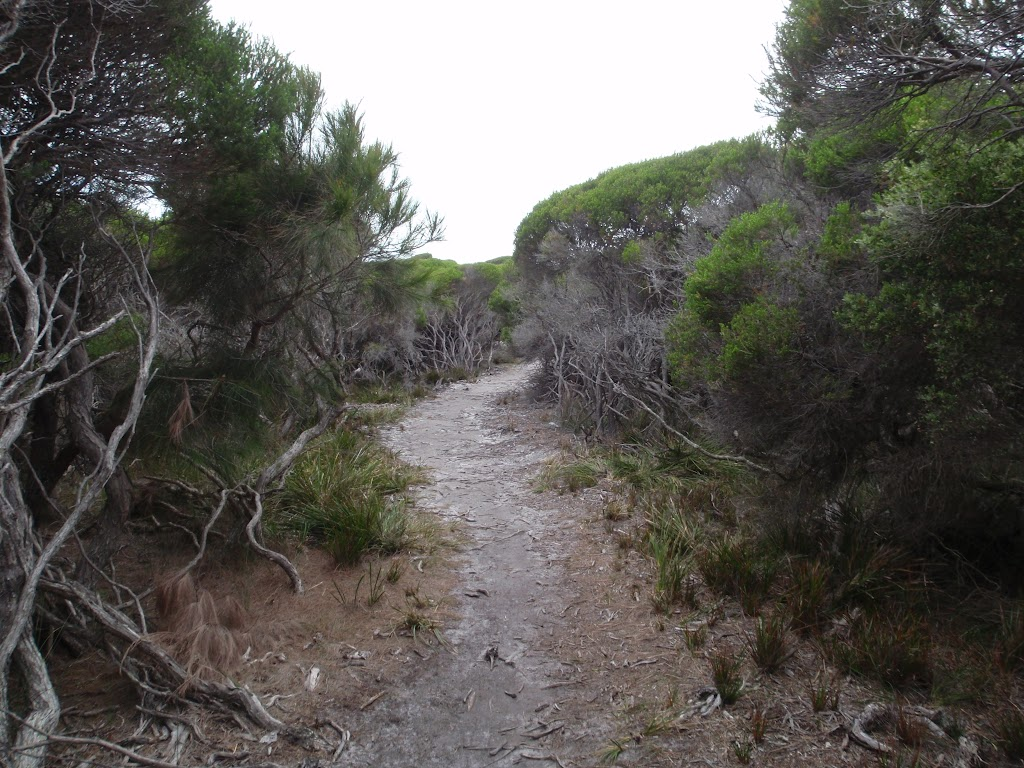 Sandy track through the melaleuca