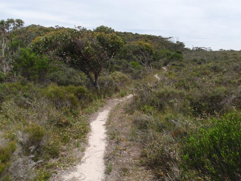 Light to Light track near Bittangabee Bay