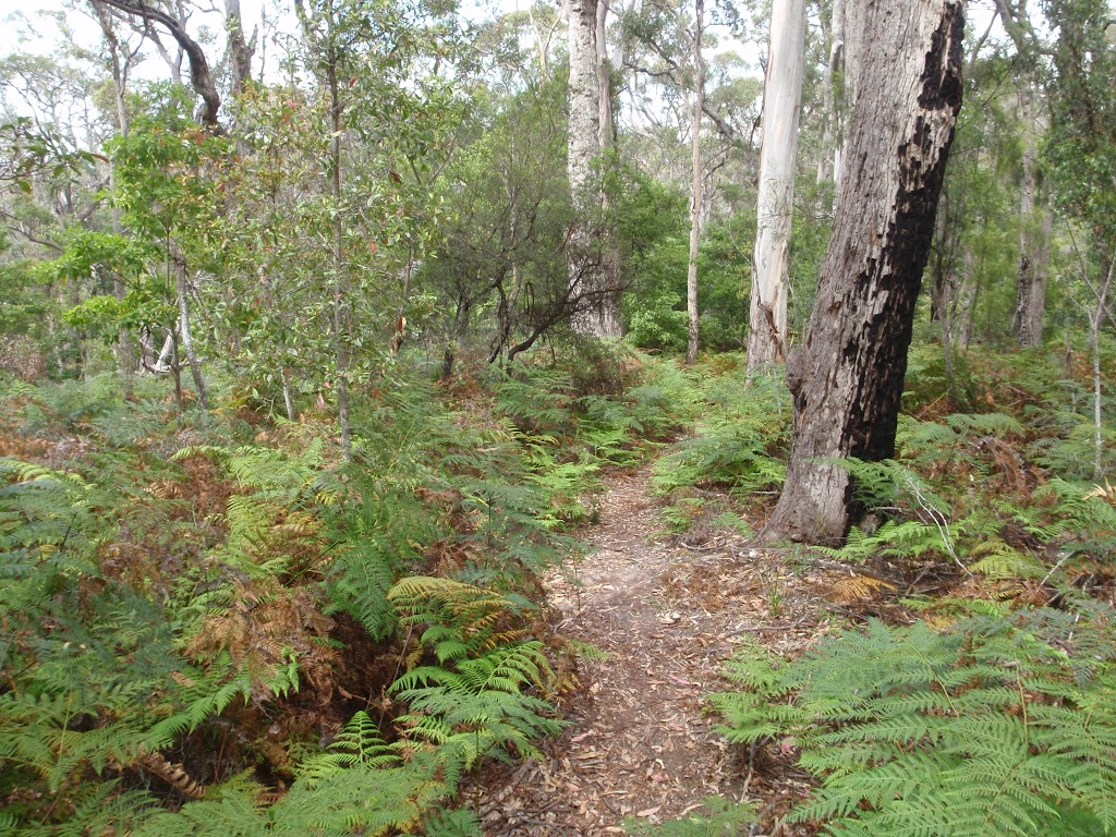 Track surrounded by ferns