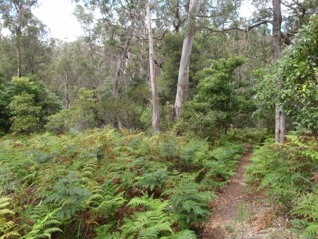 Track through the ferns near Bittangabee Creek