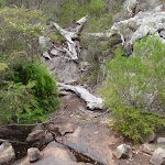 Track over Bittangabee Creek