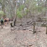 Walkers taking the alternative 'via coast' walk