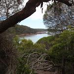 View throughthe trees of Bittangabee Bay (108097)