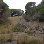 Track in open heath