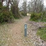 Arrow marker through the bush on the headland