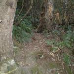 The rough Devil's Hole Bushtrack