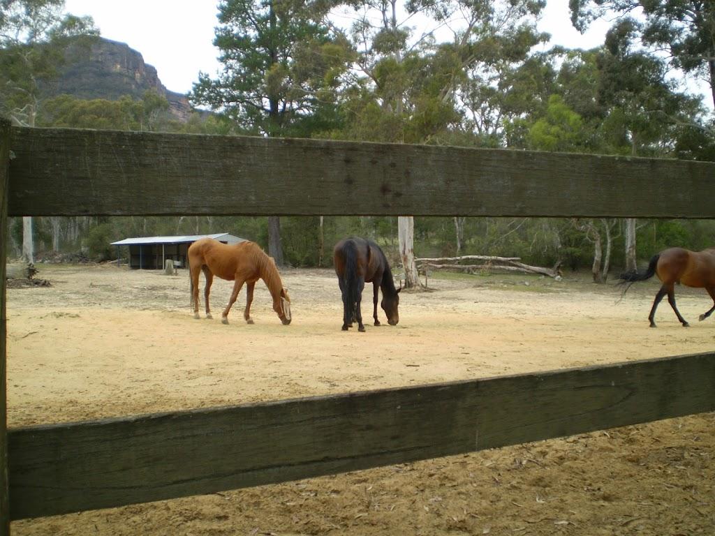 Horse Paddock near site of Megalong Village