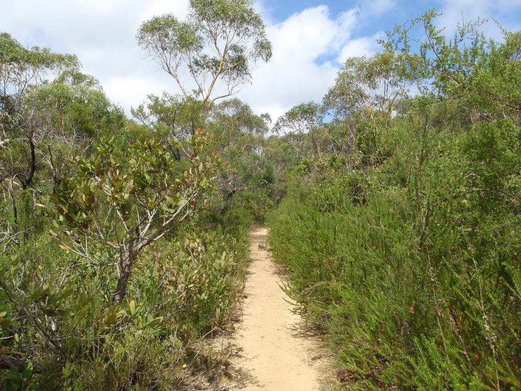 heading through the dense bushland