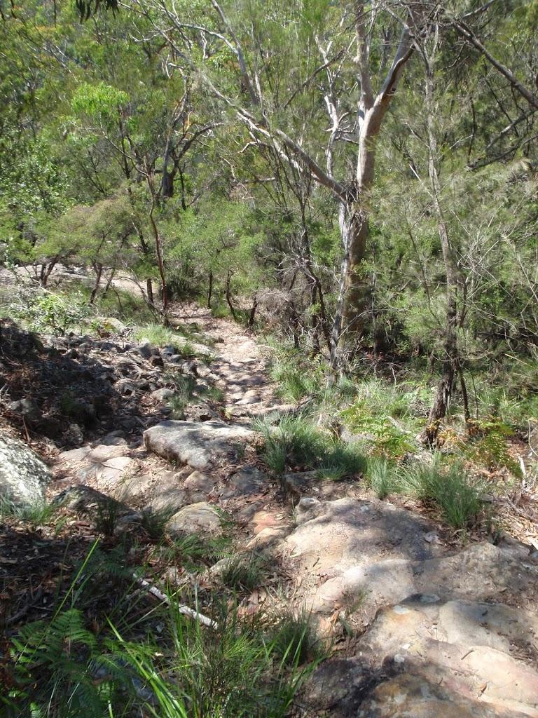 Bushtrack at lower end of Bobbin Head trail