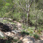 Bushtrack at lower end of Bobbin Head trail (116404)