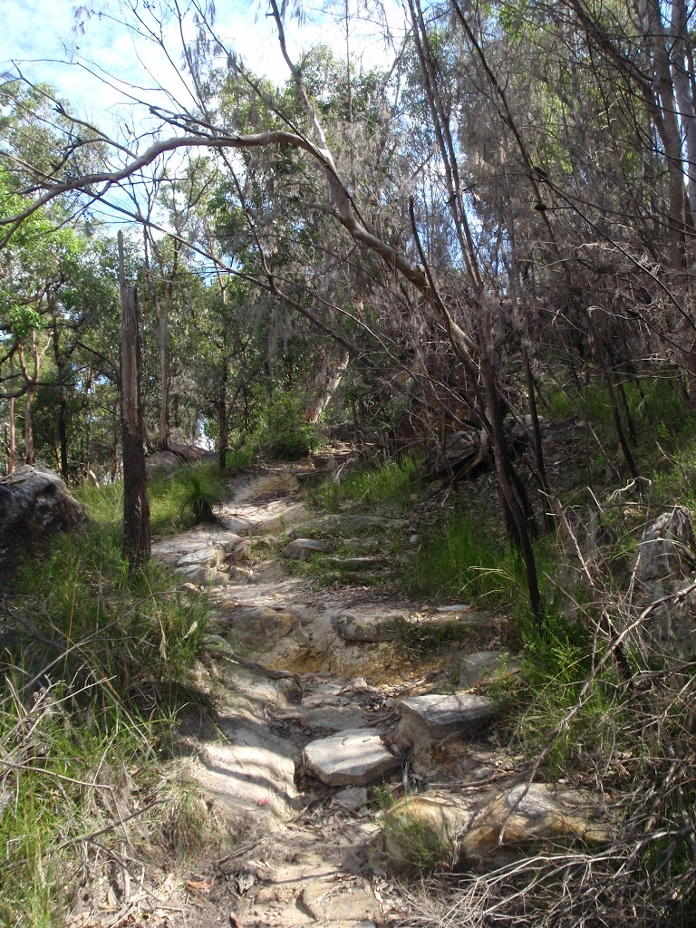 Following the Mt Kuringai Track (116623)
