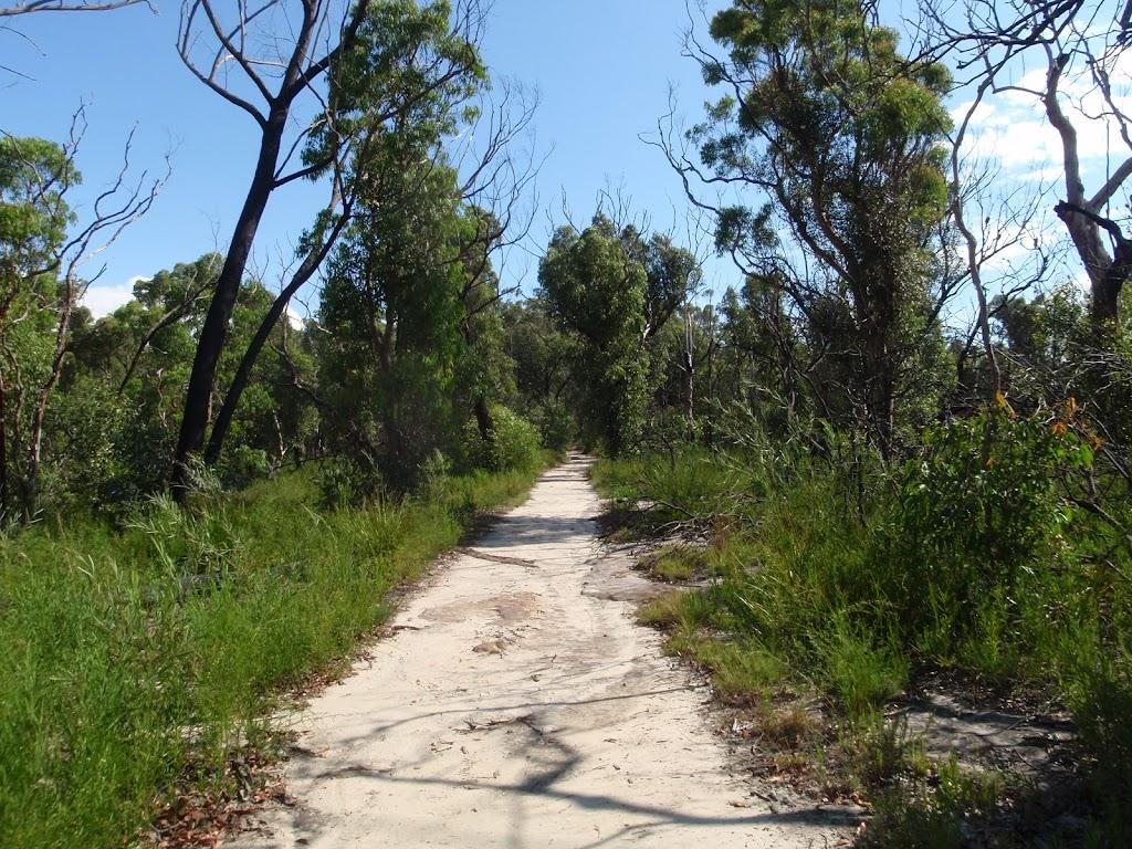 Wide trail east of Mt Kuring-gai